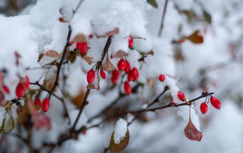 Winter Break Photo Contest Now Underway!